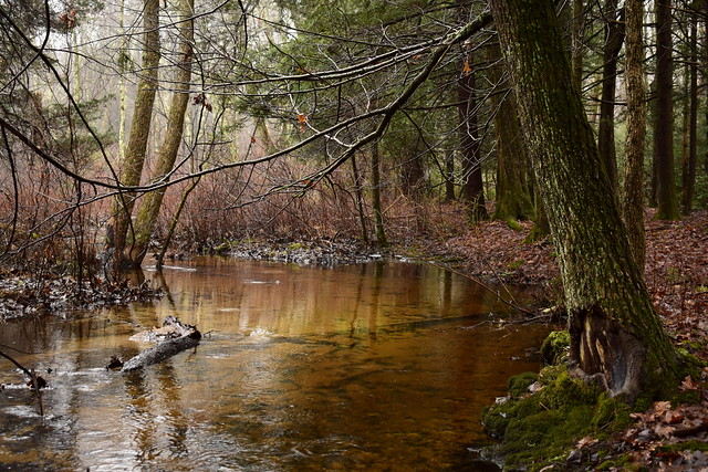 The Rainy Forest River