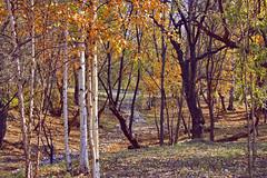 Autumn in Northern park