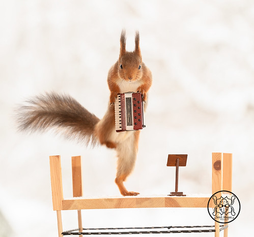 red squirrel climbing on an accordion | by Geert Weggen