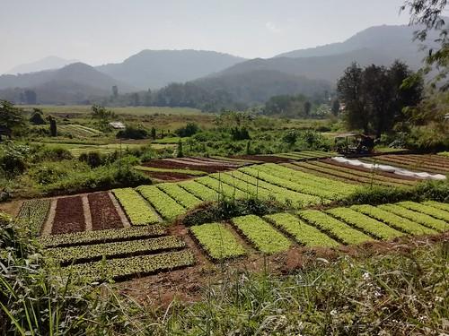 Laos   by denismartin