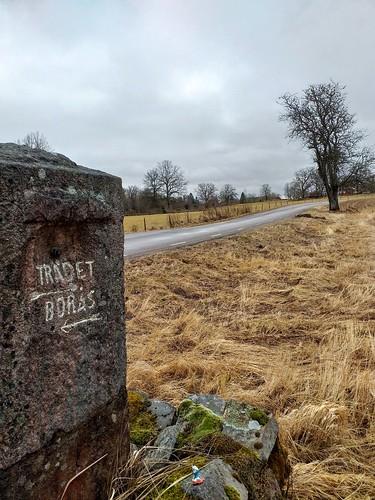 Träd1 på Sten1 | by lennarrrt