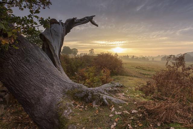 Twisted Tree Sunrise