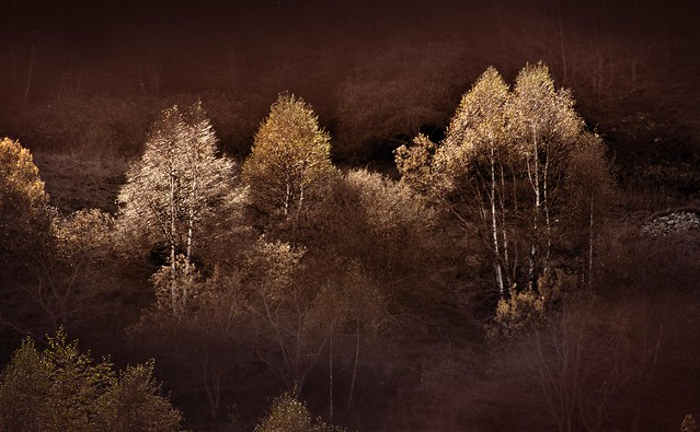 Silver-lined autumn trees