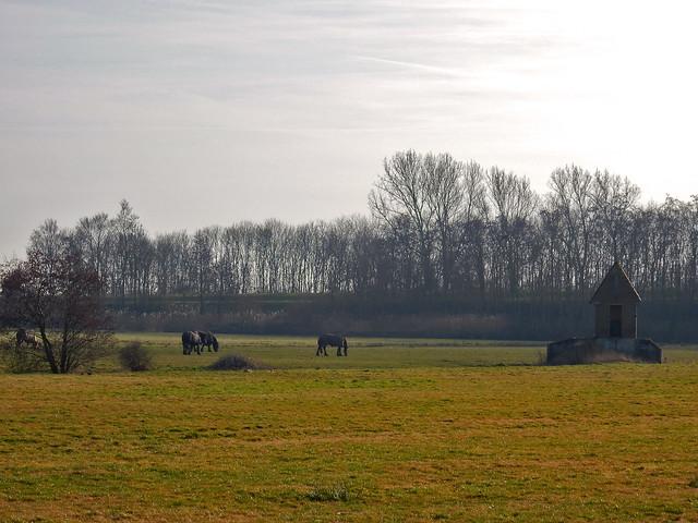 Frysian landscape near Uitwellingerga ... (N3687)