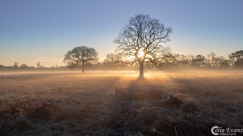 Bushy Park | by Colin_Evans