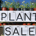 Plant Sale for Lets Grow Preston at Ashton Park