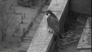 capture_01ch_20190102080951 | by FaBPeregrines