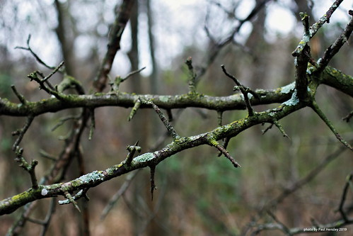 winter branches   by pvh photo