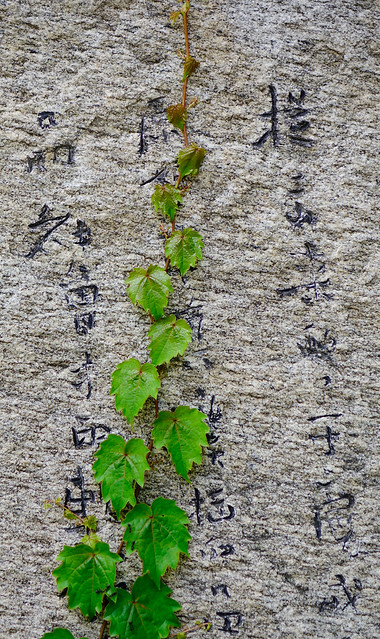 Nature green tiny leaves on the wall