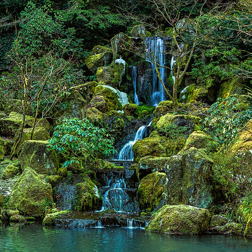 scenery oregon waterfall forest nature water winter landscape green portland cascade japanesegarden rocks
