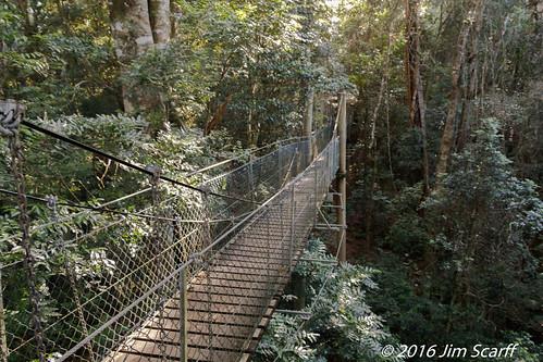 Tree top Walkway | by Jim Scarff