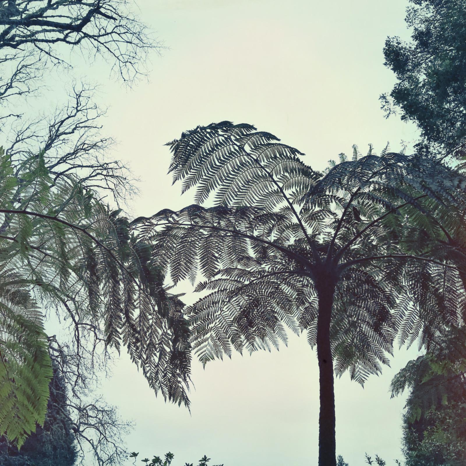 010-Madeira