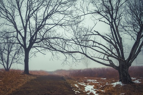 binky lee natural lands trust winter trees fog nature landscape eerie spooky dark mist preserve path