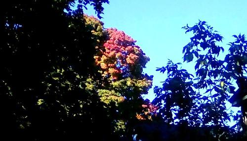 Memories of Autumn - TMT | by Maenette1