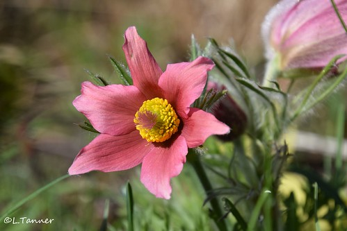 Grüße aus meinem Aprilgarten