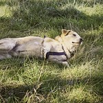2016-09-09_15-04-37 - Hund im Gras