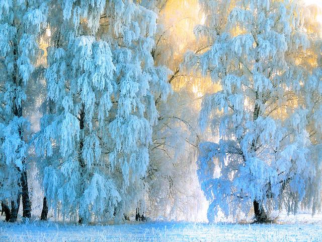 Kingdom of the blue hoarfrost