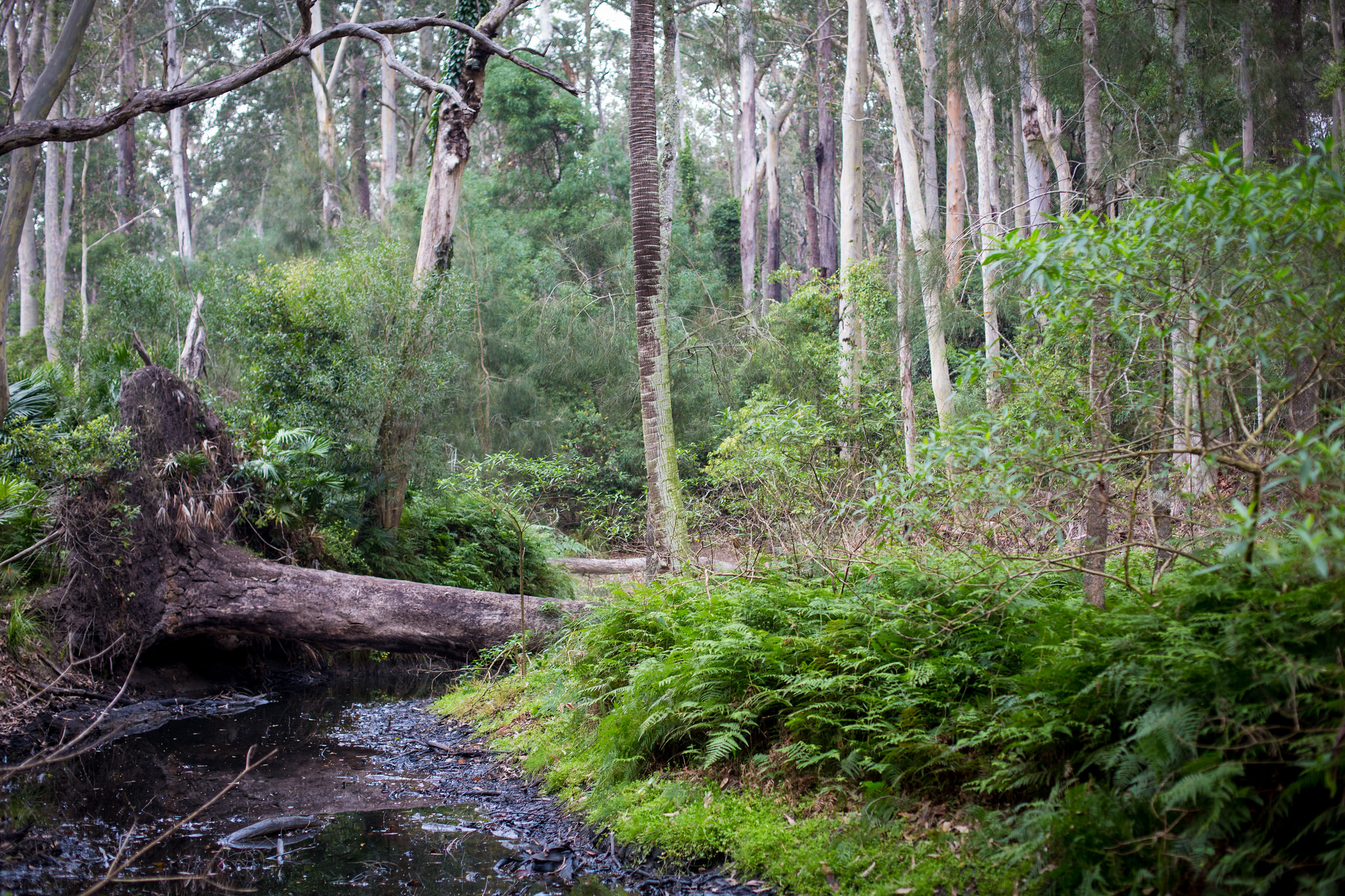 Durras Lake Discovery Trail