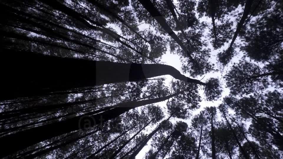Mangunan Pine Forest, Bantul, Jogja
