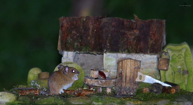 wood mouse and little house (4)