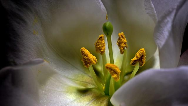 Blütenkelch (calyx)