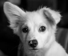 Portrait for the photo contest!