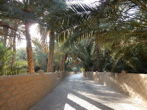 Al Ain Oasis - 2