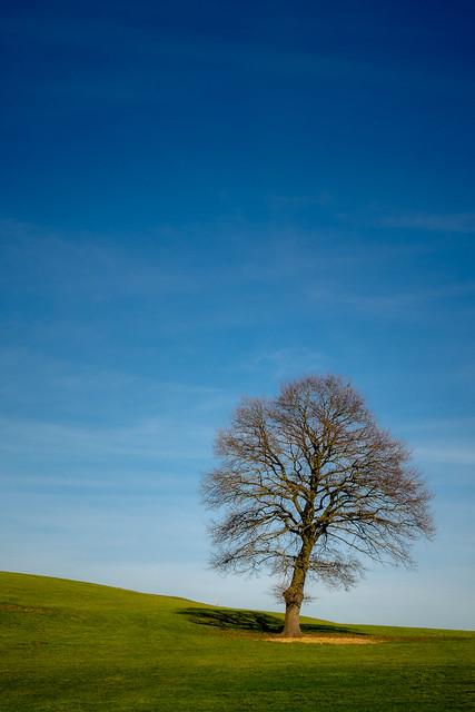 Der Baum bei Krauthausen