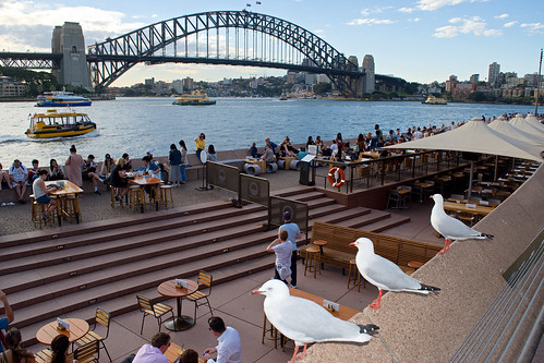 Crowd Watching Seagulls Sydney Harbour