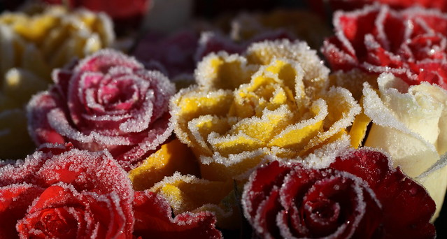 more iced roses