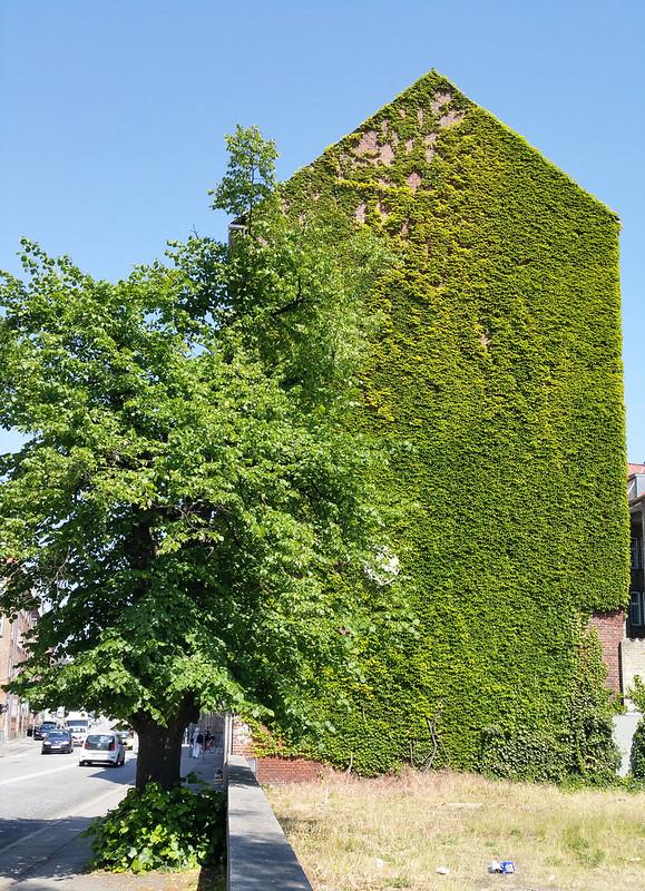 Groene gevel, Aarhus