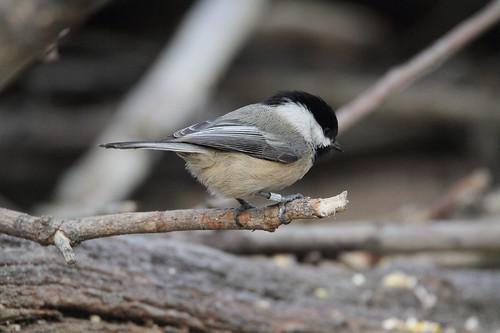 yakimacounty washingtonstate yakimaareaarboretum bird