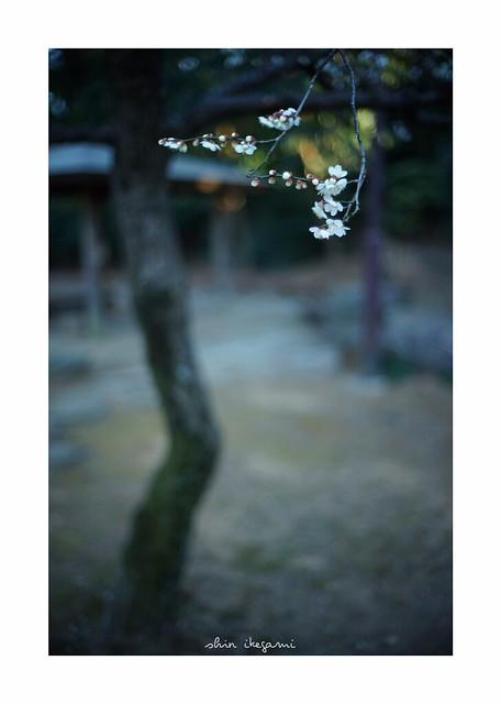 2019/2/23 - 18/21 photo by shin ikegami. - SONY ILCE‑7M2 / Voigtlander NOKTON CLASSIC 40mm f1.4 SC VM