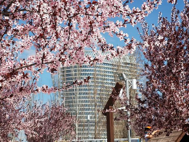 Primavera adelantada en el Parque del Agua (Zaragoza)