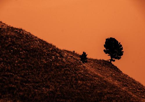 the black hills custer state park rapid city south dakota sd 40 day adventure robert kramer natureinfocusgroup