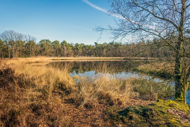Dutch nature reserve in the winter season