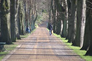 Line of trees at Avenham Park, Preston | by Tony Worrall