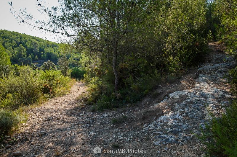 Llegando a un viñedo abandonado a los pies del Turó de la Roqueta