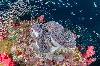 I'd Travel All the Way Here for the Anemones | by Chris DeNamur