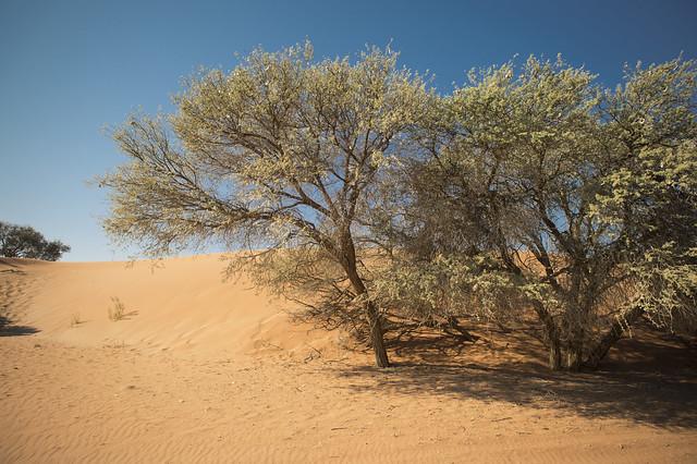 treeologie8