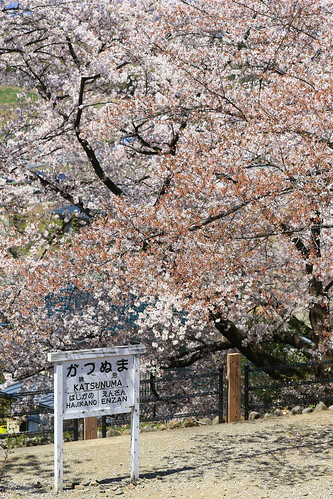 桜 | by kimuchi583
