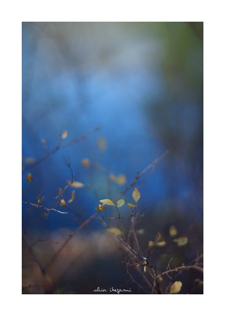2019/1/19 - 9/15 photo by shin ikegami. - SONY ILCE‑7M2 / Carl Zeiss C Sonnar T* 1.5/50 ZM