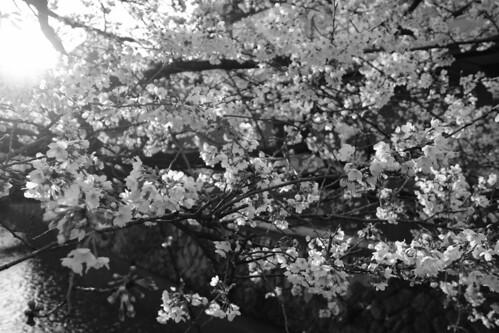 03-04-2019 Kyoto (34)