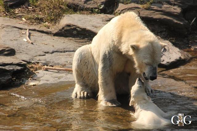 Besuch Tierpark Friedrichsfelde 06.04.201948