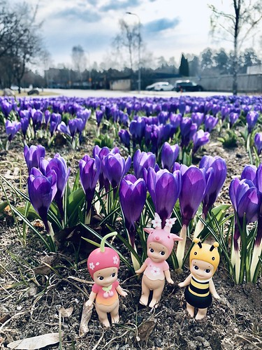 crocuses at the bus stop, spring has sprung 💜, april 2019