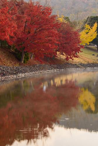 japan 奈良県 奈良公園 大仏池 temple 紅葉 autumnleaves 日の出 sunrise