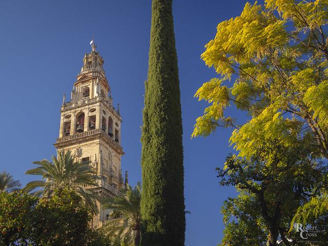 Autumn Color in Córdoba