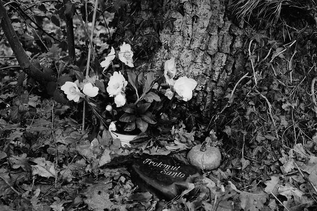 Baumgrab/ Urn burial - I shot fim