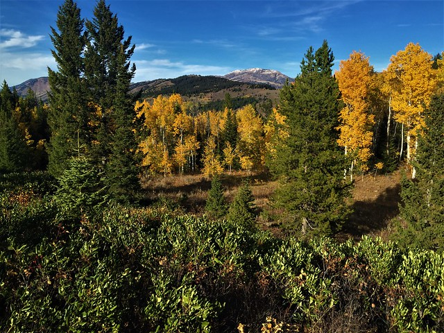 Changing Colors in The High country