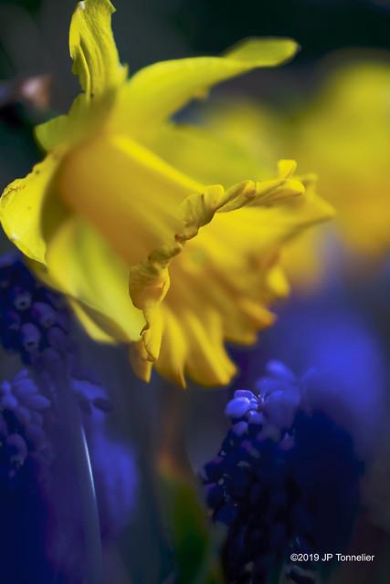 Couleurs de printemps